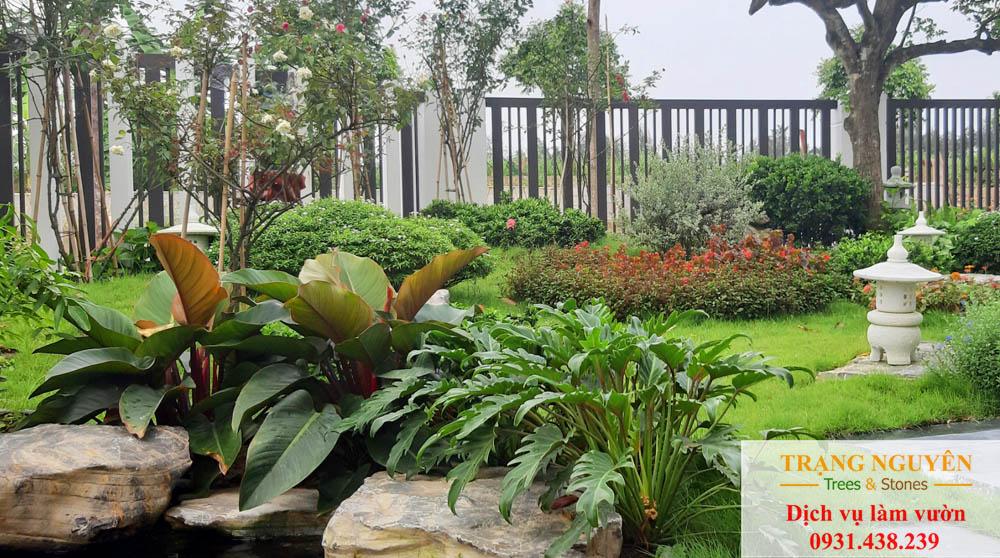 Cây cảnh sân vườn tại quận 4