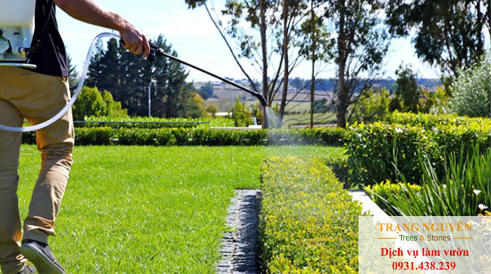 Chăm sóc cây cảnh tại quận 2