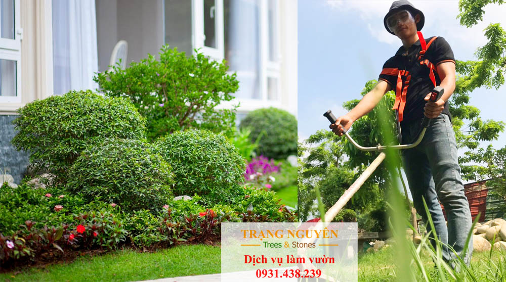 Chăm sóc sân vườn quận 4