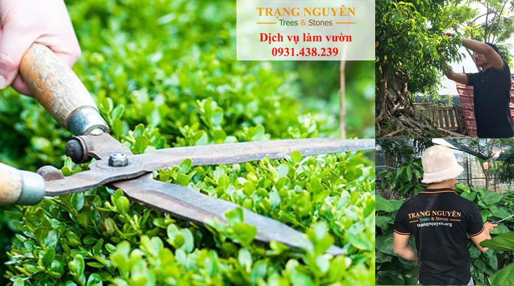 Chăm sóc sân vườn tại Tân Bình