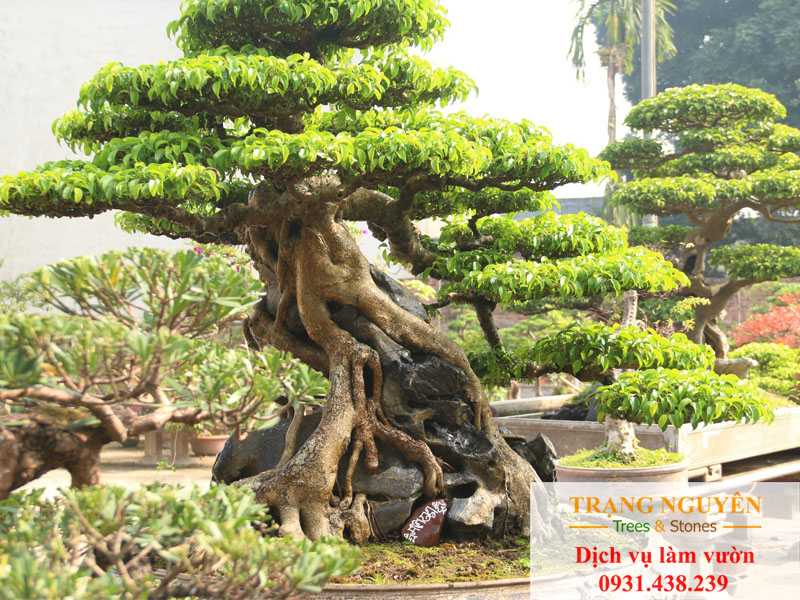 Những loại cây may mắn khi trồng trong vườn
