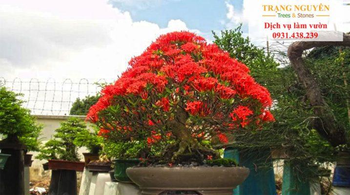 Gợi ý 10 loại cây xanh nên trồng