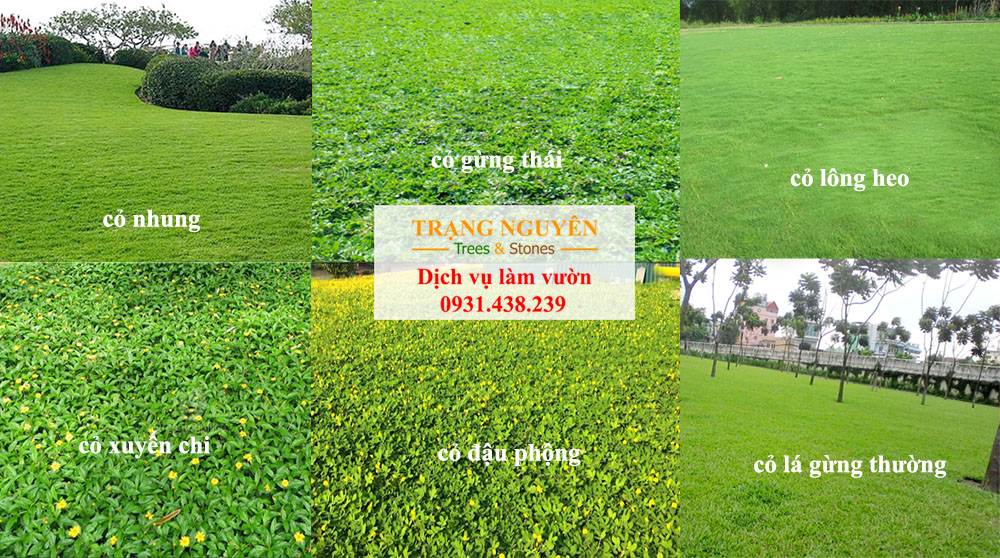 Thi công trồng cỏ