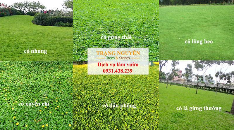 Trồng cỏ cảnh quan sân vườn