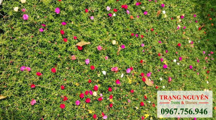 Hoa mười giờ đẹp